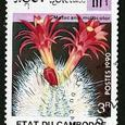 Matucana multicolor 1990