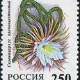 Selenicereus grandiflorus 1994