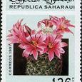 Mammillaria swinglei 1997
