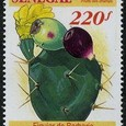 Opuntia 1992