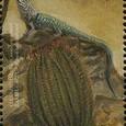 Ferocactus acanthodes 1999
