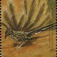 Echinocereus fasciculatus 1999