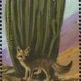 Lemaireocereus thurberi 1999