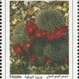Cactus-Syria 2008