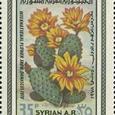 Cactus-Syria 1978