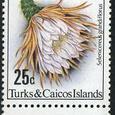 Selenicereus grandiflorus 1981