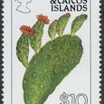 Opuntia bahamana 1990