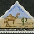 Cactus-Yemen 1970