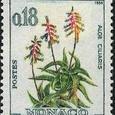 Aloe ciliaris 1964