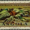 Welwitschia mirabilis 1959