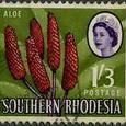 Aloe 1964