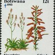 Aloe zebrina 1993