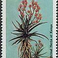 Aloe volkensii 1987
