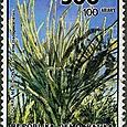 Didierea madagascariensis 1990