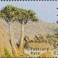 Aloe dichotoma 2006