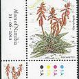 Aloe variegata 2011