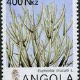 Euphorbia tirucalli 1983