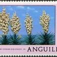 Yucca aloifolia 1977