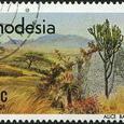 Aloe 1977