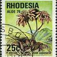 Aloe saponaria 1975