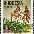 Aloe musapana 1975
