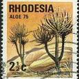 Euphorbia confinalis 1975