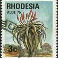 Aloe ecelsa 1975