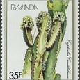 Euphorbia candelabrum 1982