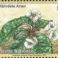 Euphorbia cremersii 1996
