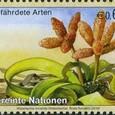 Welwitschia mirabilis 2010