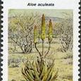 Aloe aculeata 1990