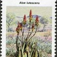 Aloe lutescens 1990