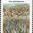 Aloe globuligemma 1990
