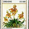 Aloe inyangensis 2004