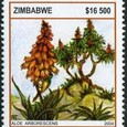 Aloe arborescens 2004