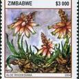 Aloe rhodesiana 2004