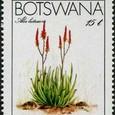 Aloe lutescens 1983
