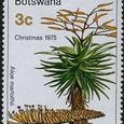 Aloe marlothii 1975