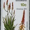 Aloe lutescens 1975