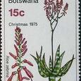 Aloe zebrina 1975