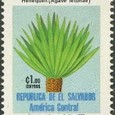 Agave letonae 1983