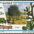 Euphorbia ampliphylla 1993