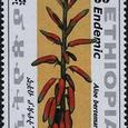 Aloe bertemariae 2006