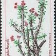 Euphorbia milii 1998