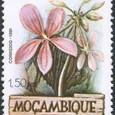 Pelargonium luridum 1981