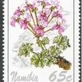 Pelargonium cortusifolium 1994