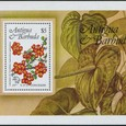 Euphorbia splendens 1986