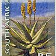 Aloe ferox 2011