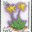Rhombophyllum rhomboideum 1995