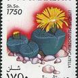Lithops pseudotruncatella 1995